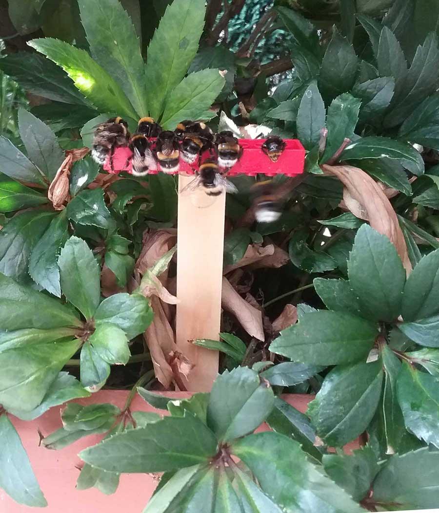 Hummeln und Bienen