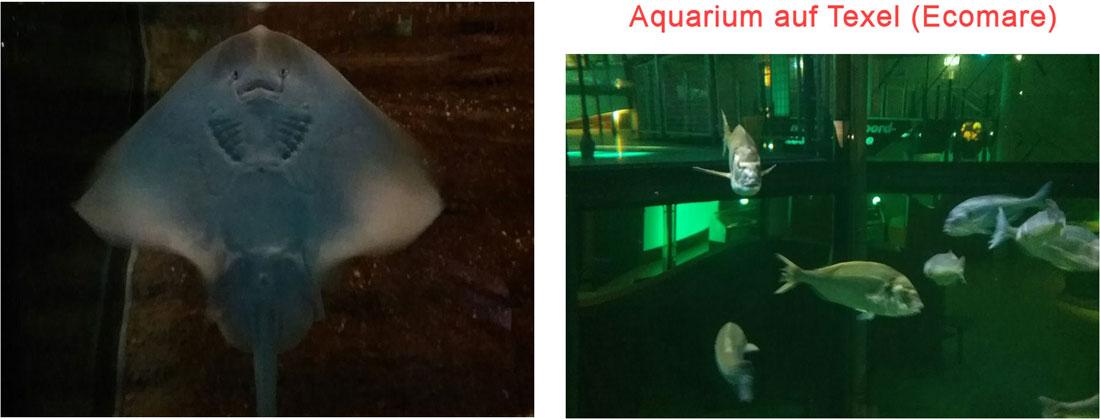 Aquarium im Ecomare